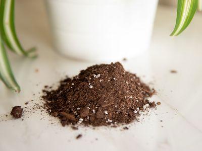 potting soil next to a houseplant