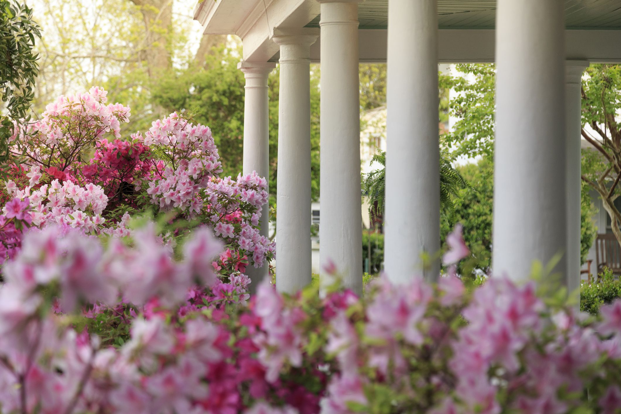 11 Best Landscaping Shrubs To Grow In Your Yard