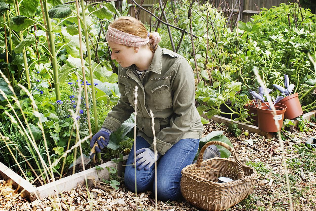 Image result for Why Garden Organically?