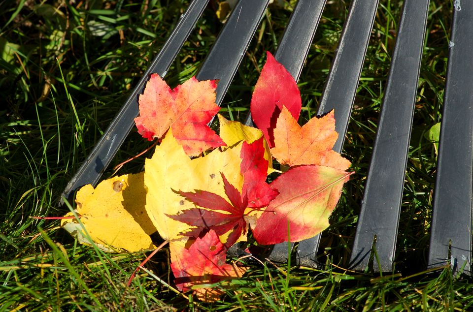 Fall leaves over a metal grate in grass