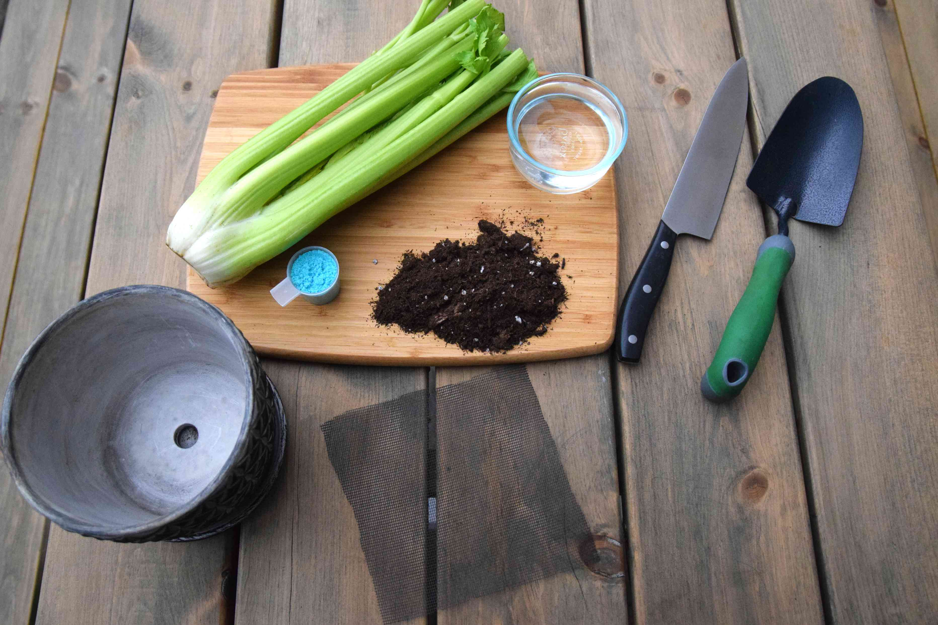materials for growing celery from the base
