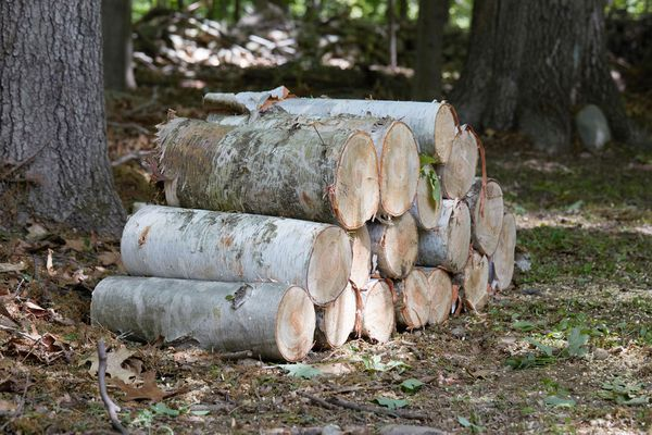 Stack of cut firewood logs in wooden area