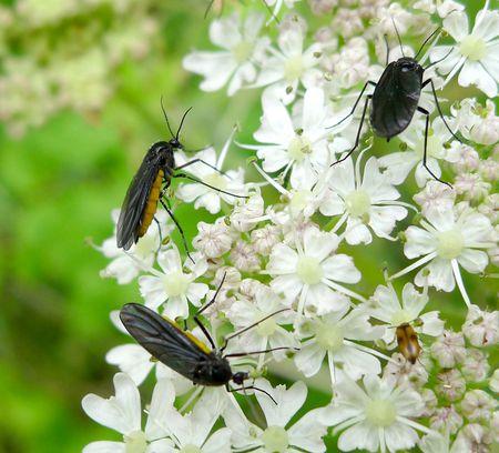 Fungus Gnats - Major Pest of New Plant Seedlings