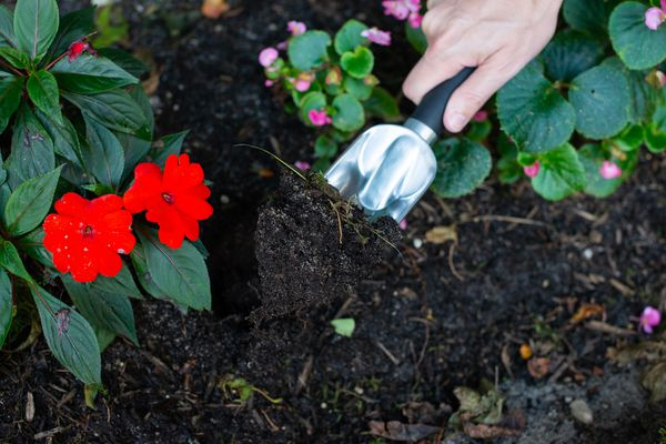 digging soil up in a garden