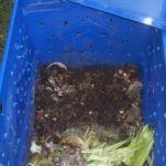 Plastic storage bin composter
