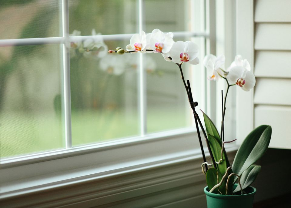 Orchids in planter