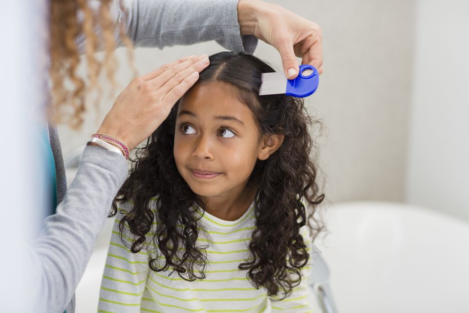 Combing out head lice from a girl's hair