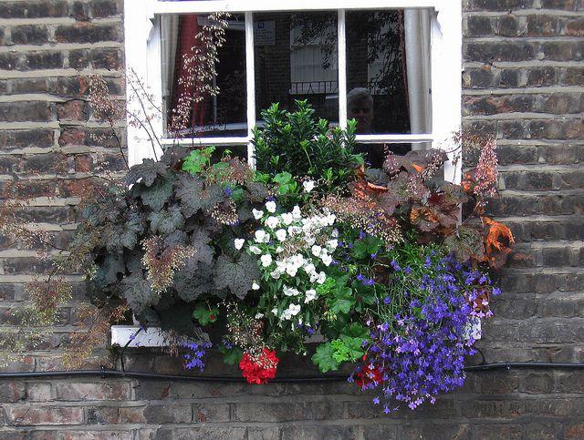 Coral Bells and Lobelia Window Box