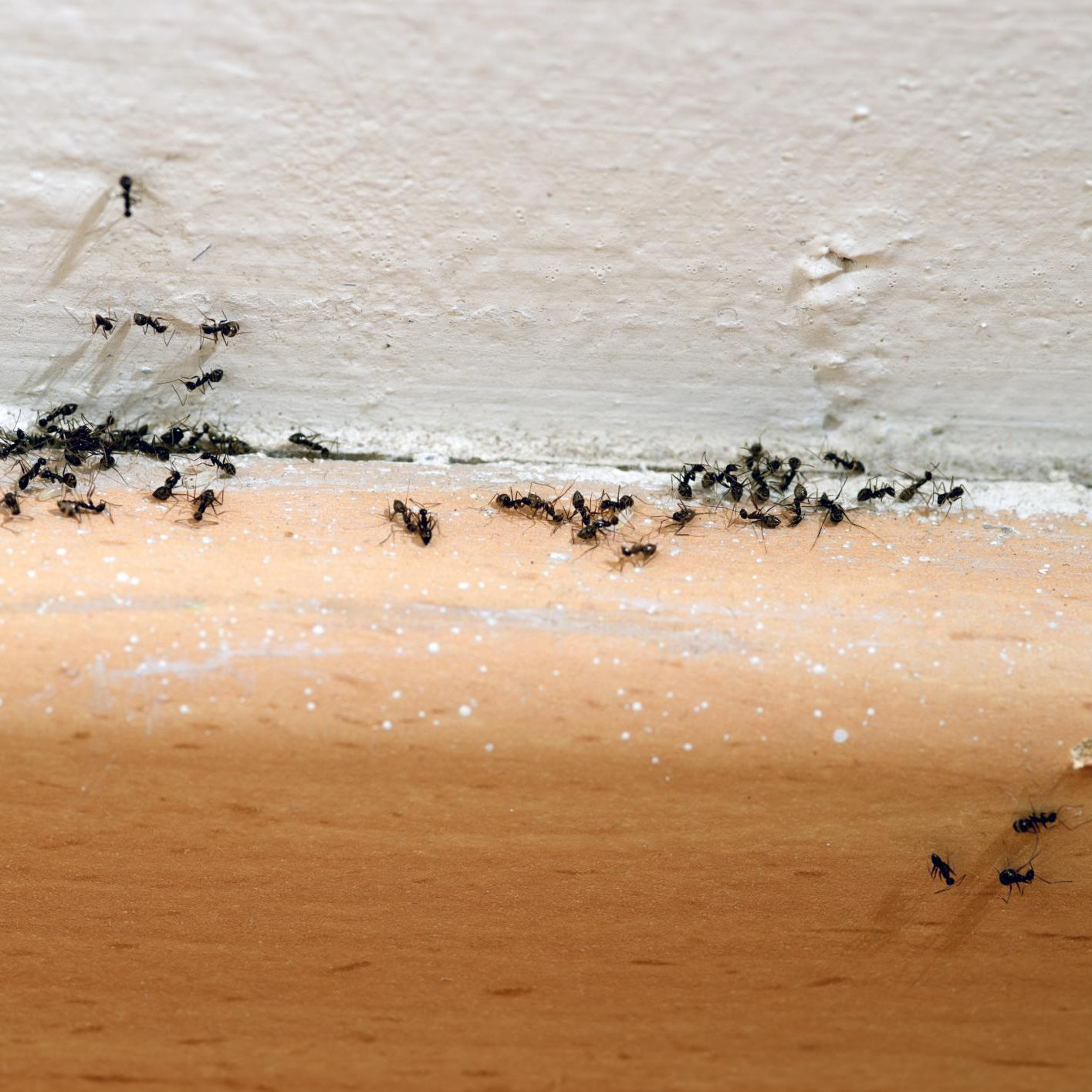 Admirable 9 Simple Steps To Get Rid Of Ants And Keep Them Out Beutiful Home Inspiration Semekurdistantinfo