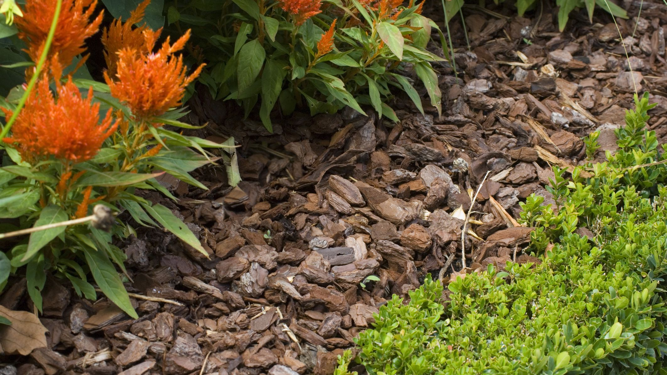 Mulch What It Means How S Used In Landscaping
