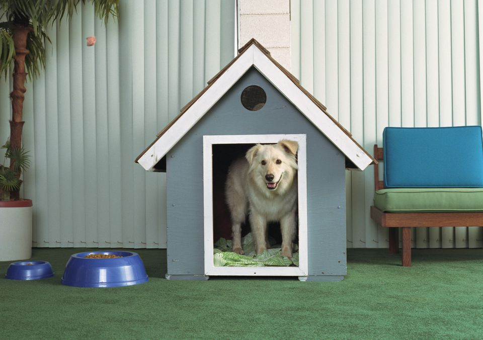 Dog in dog house