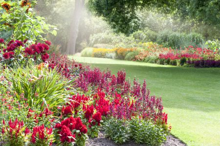 10 foolproof perennial plants for the northeast us mightylinksfo