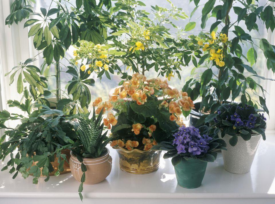 House Plants on a windowsill.
