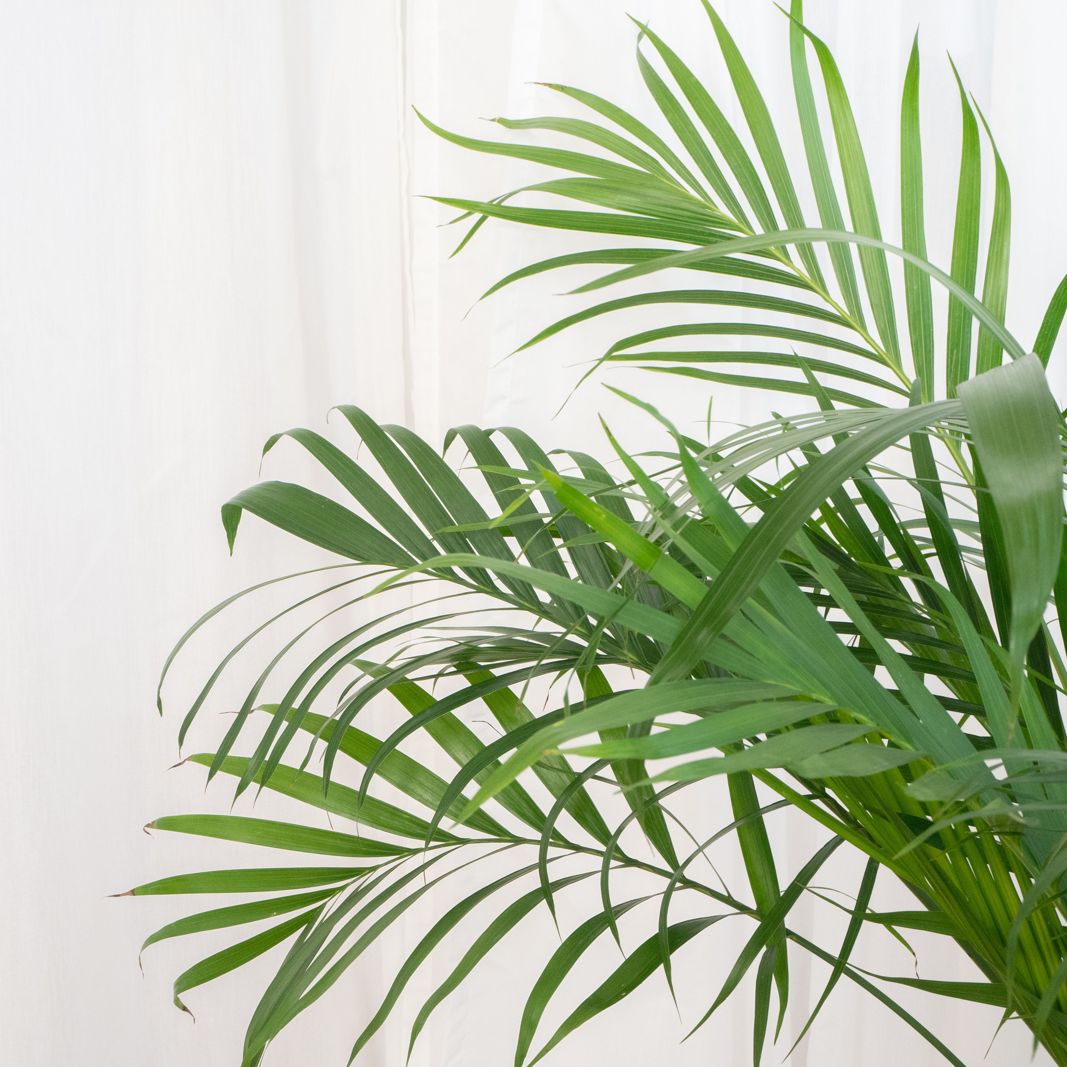 8 Types Of Palm Plants To Grow Indoors There are a multitude of types of tropical plants that blend nicely with palms or other trees and will add charm to almost any garden. 8 types of palm plants to grow indoors