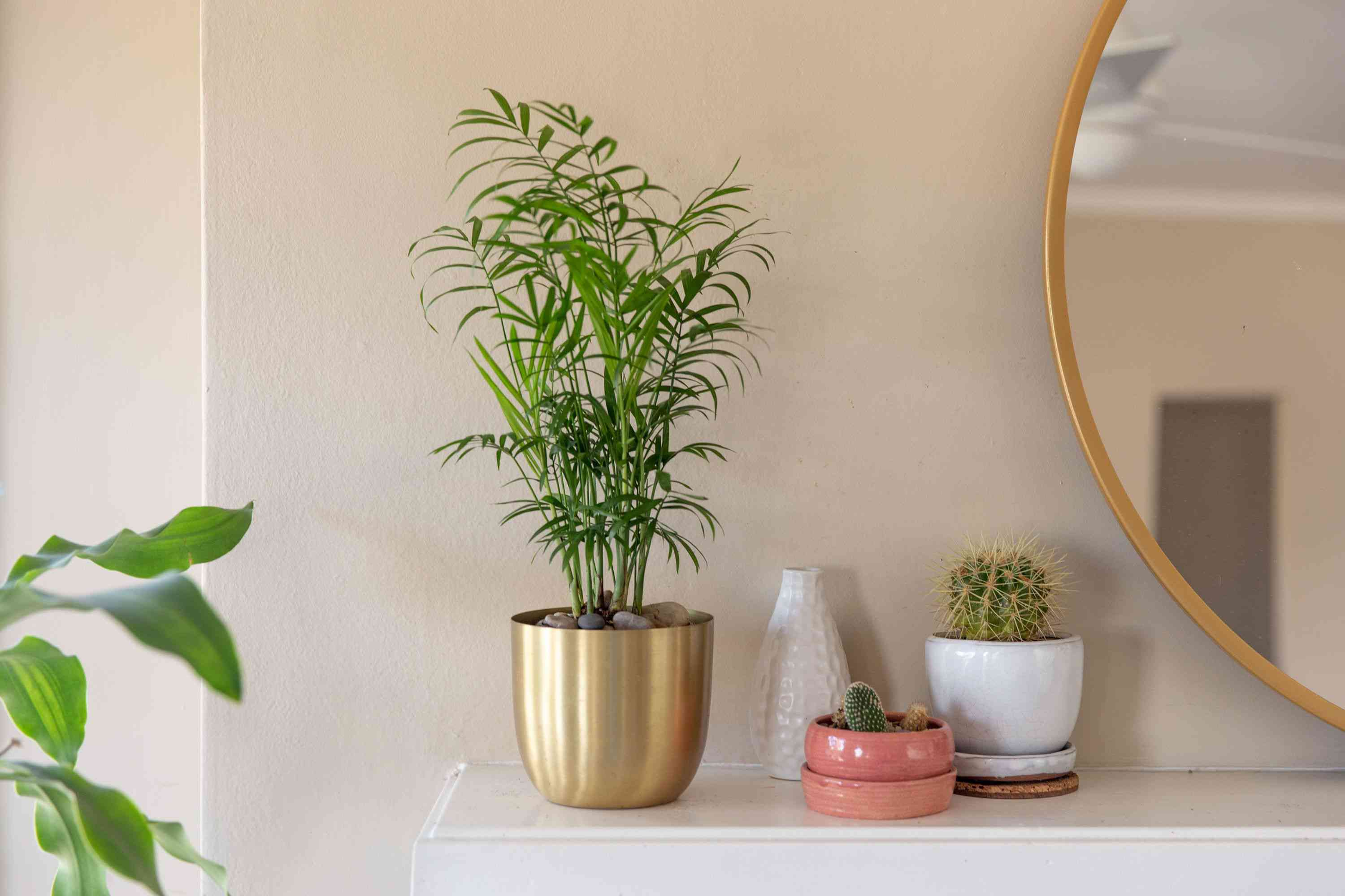 Parlor palm in gold pot with small green fronds on shelf next to decor items