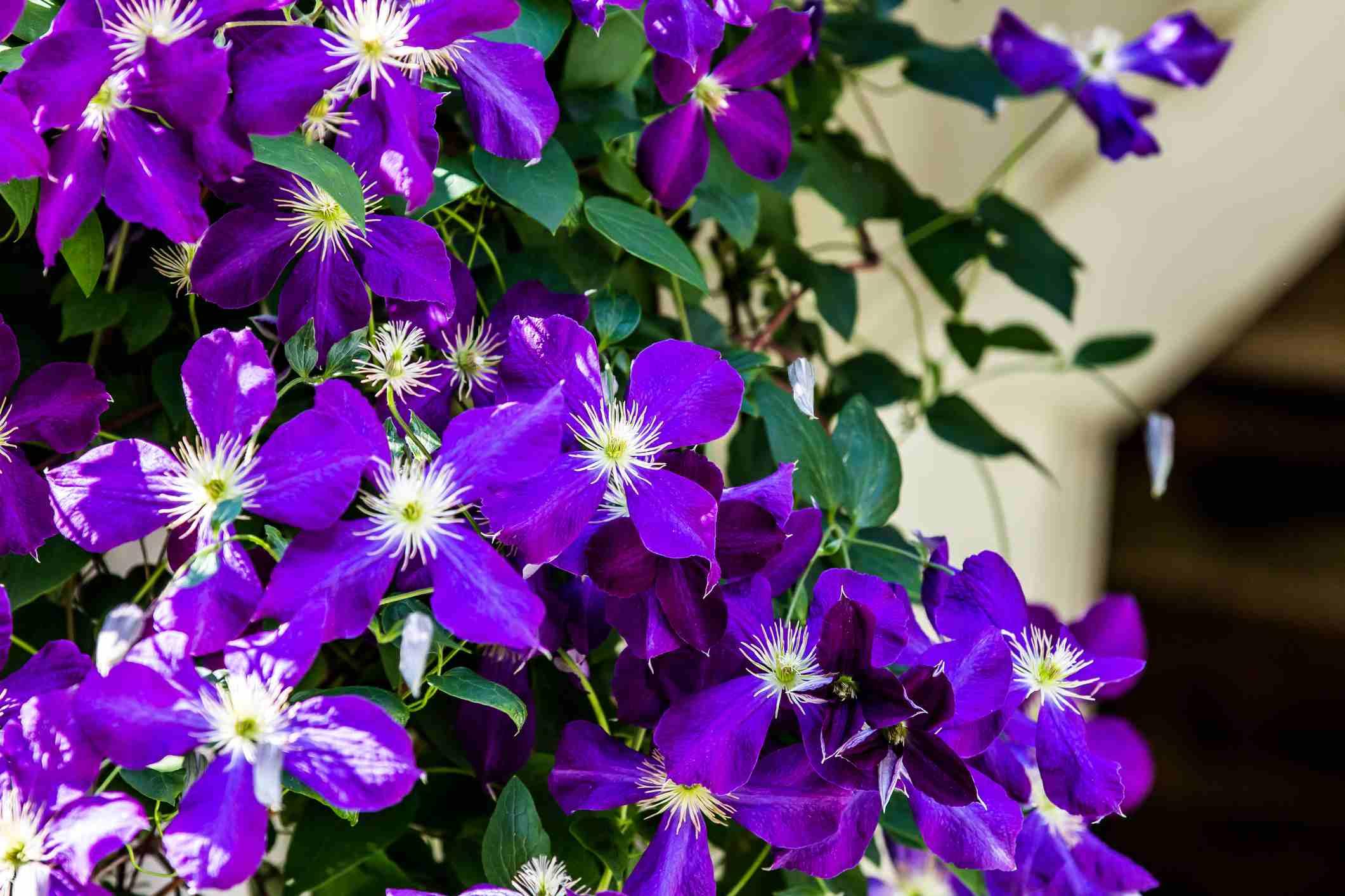 Pictures of purple flowers izmirmasajfo