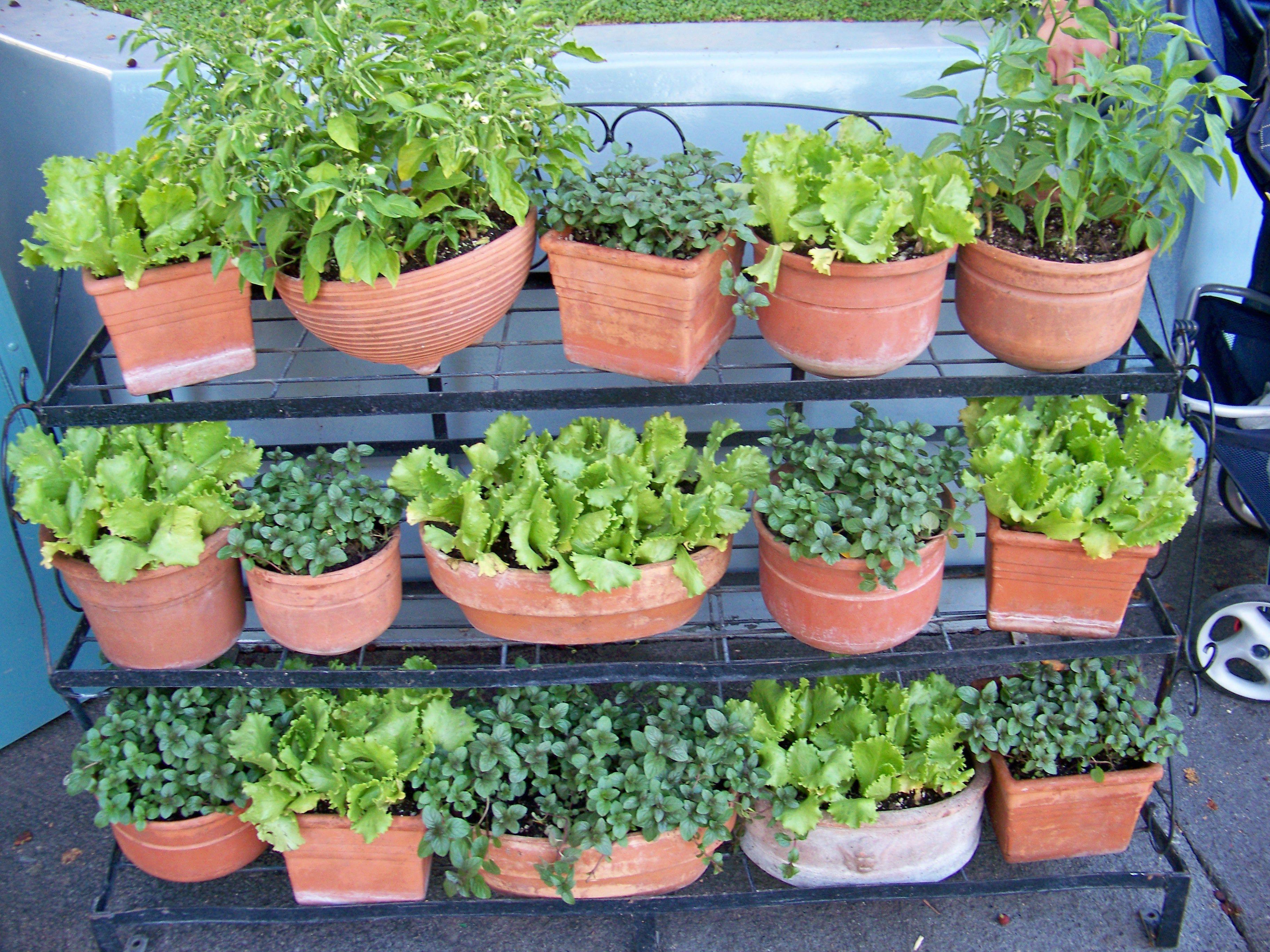 27 Creative Vegetable Garden Ideas