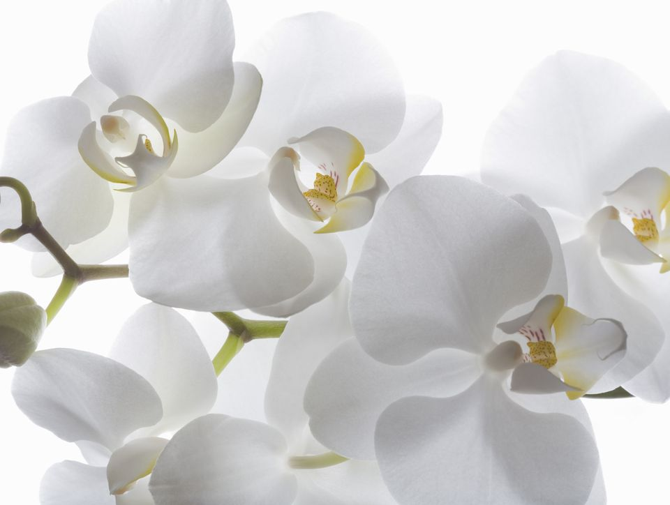 feng shui white color tips
