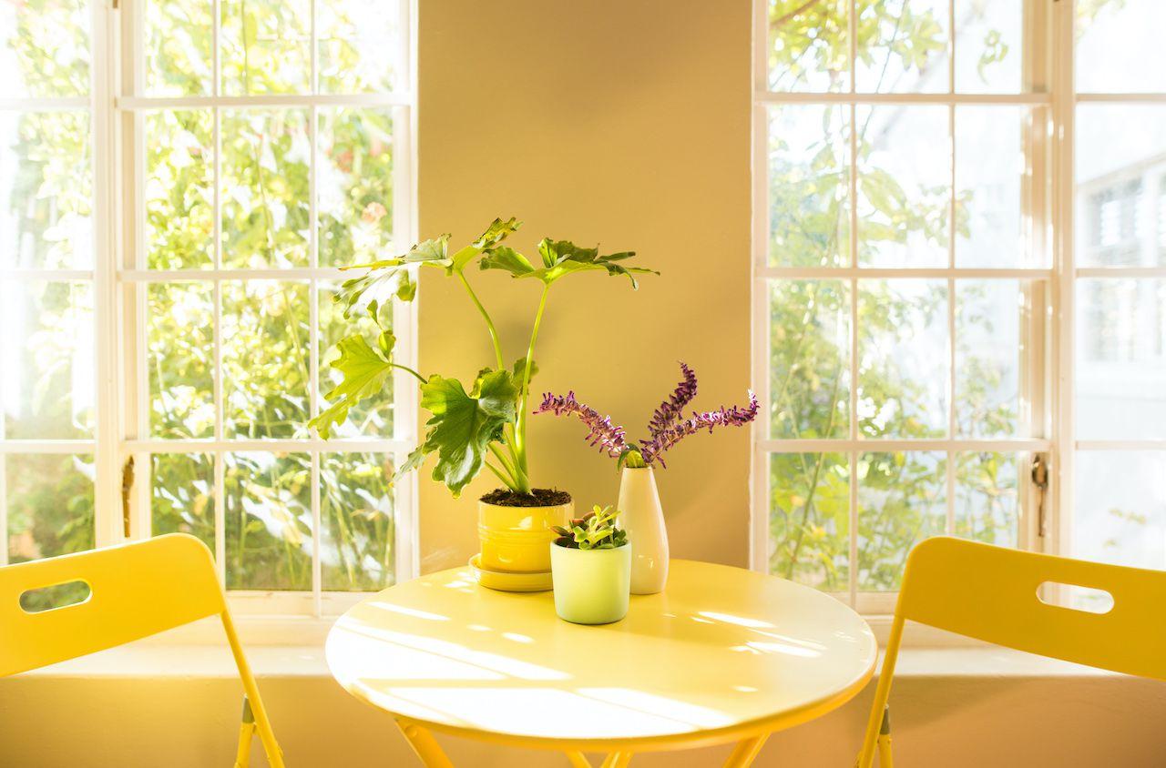 Light filled kitchen table, plants