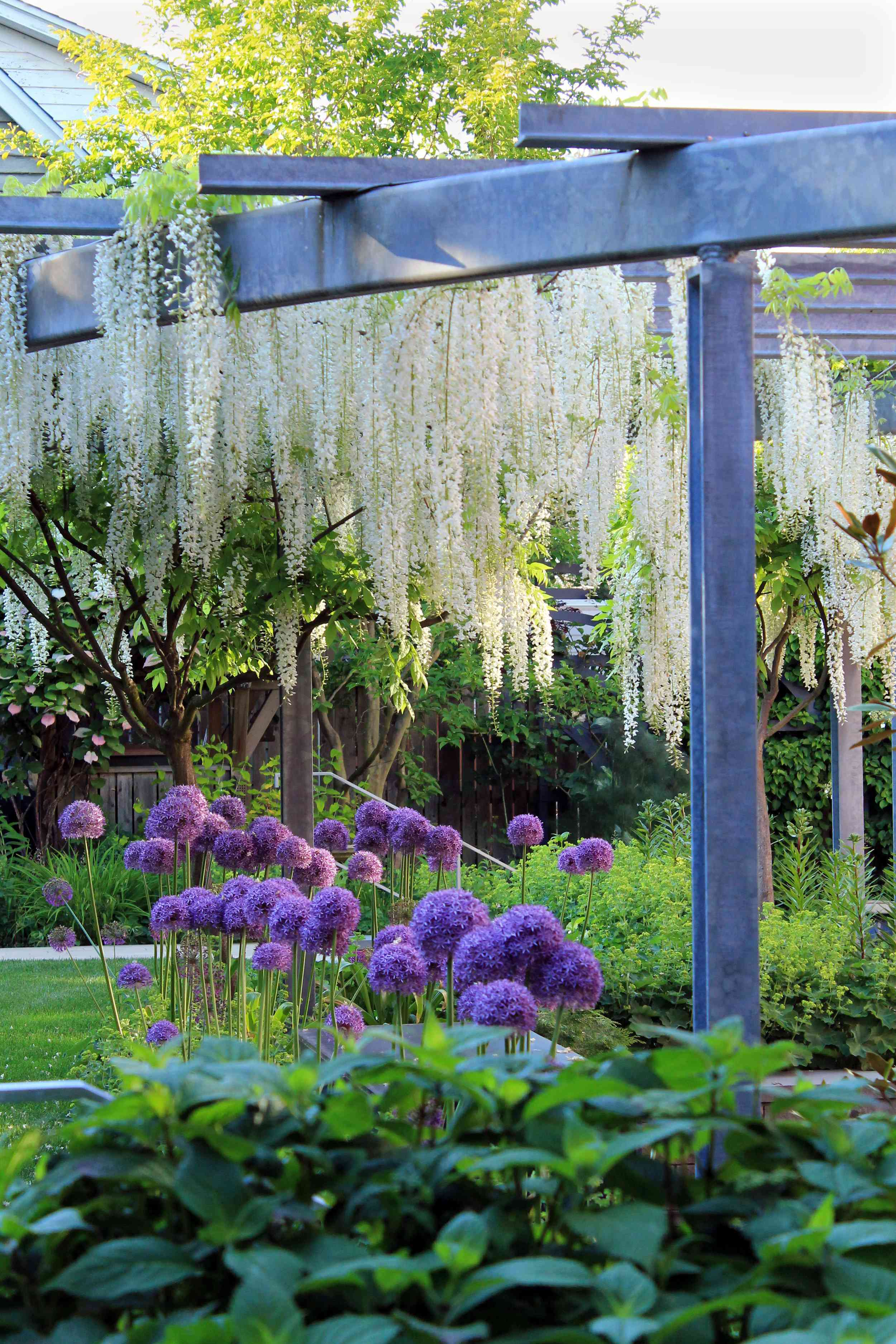 backyard pergola with flowering plants