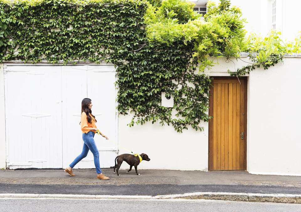 Woman walking a dog in the suburbs