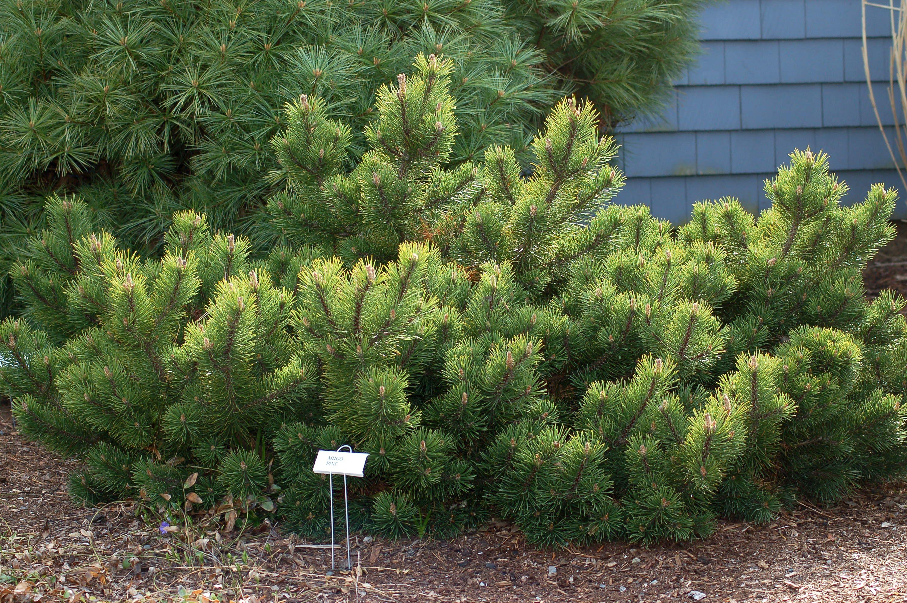 Best Drought Tolerant Trees