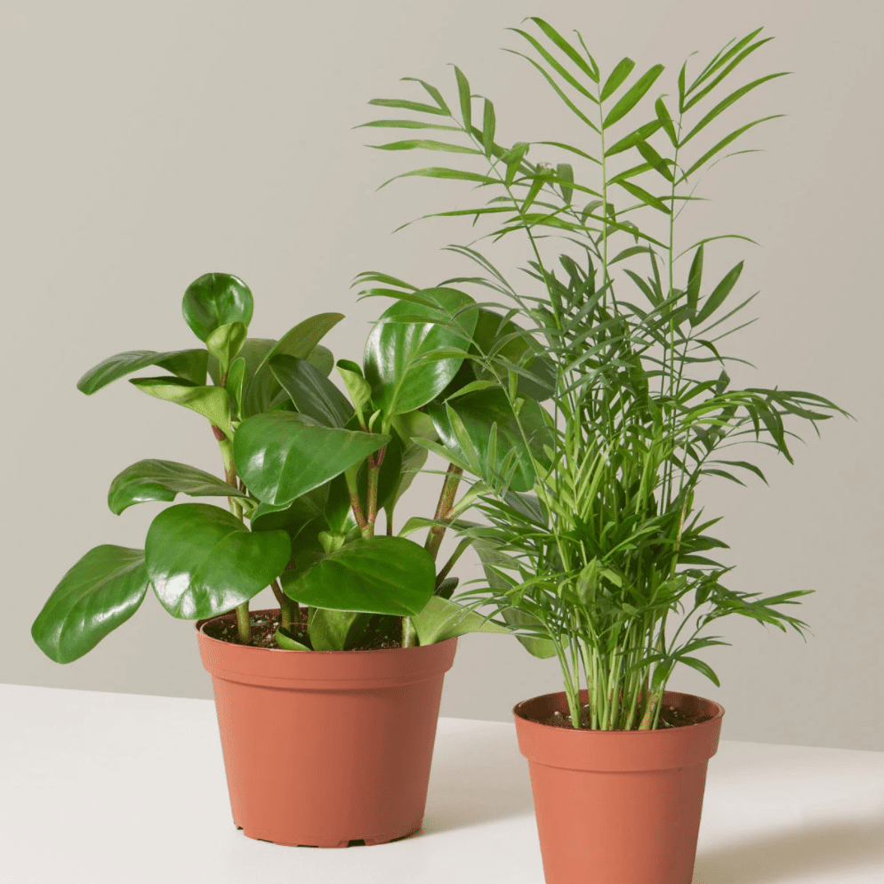 The Sill bundle plant
