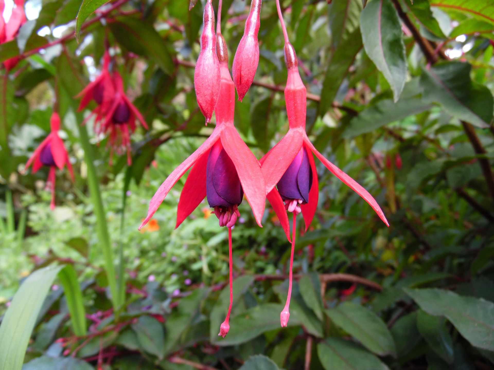 Top 10 Outdoor Plants That Thrive Indoors