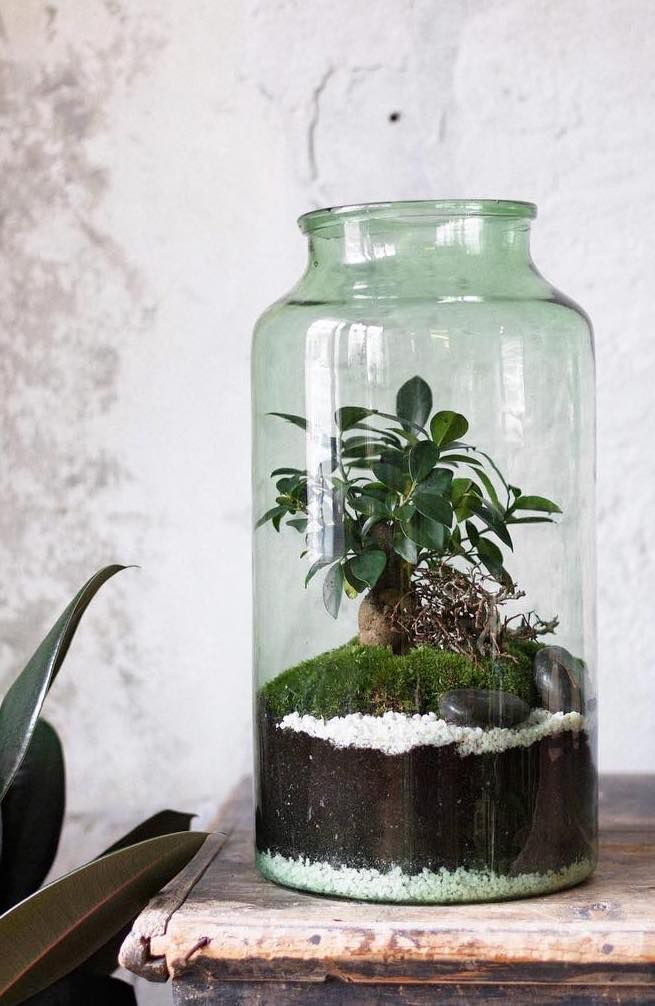 Glass jar with small tree