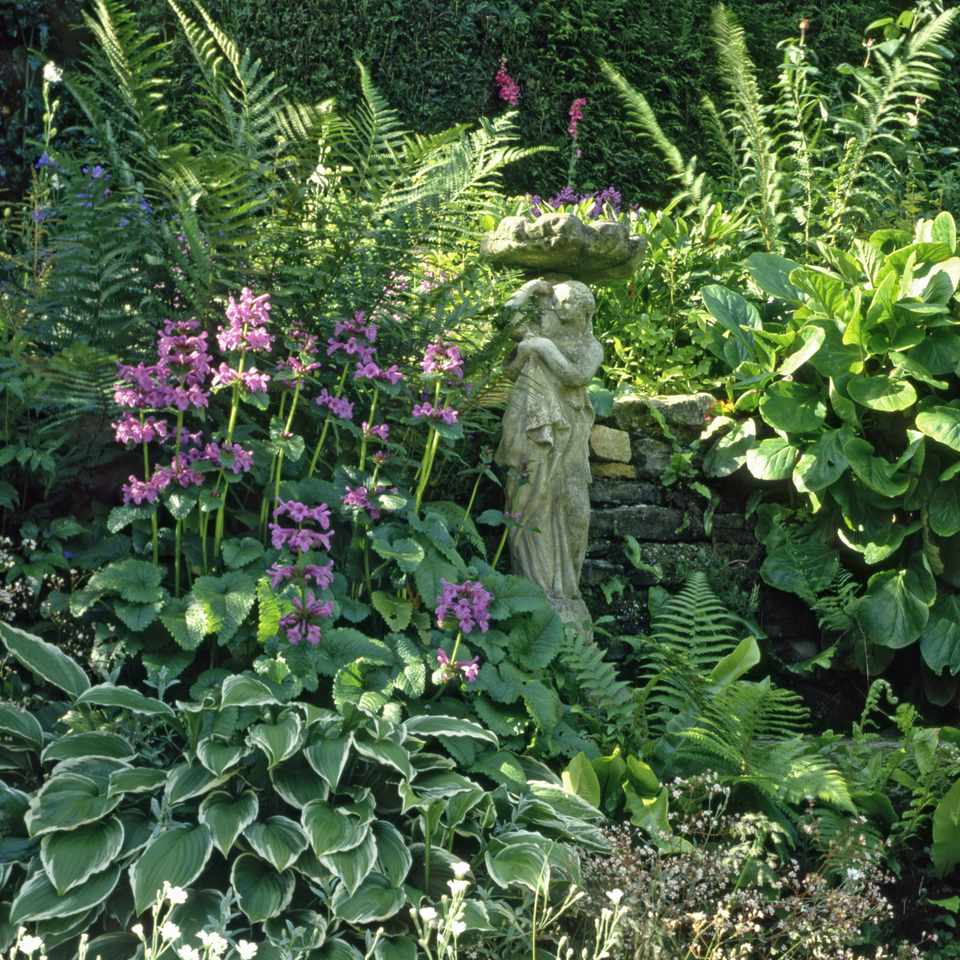 shade border with stachys officinalis (wood betony), fern, hosta. dry stone wall and statue june primula