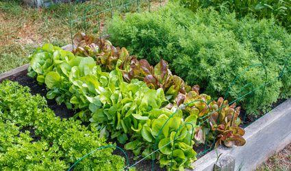 Raised bed in an urban community garden