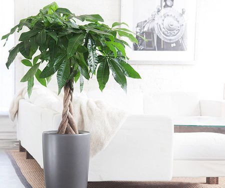 How to make a money tree for a birthday gift