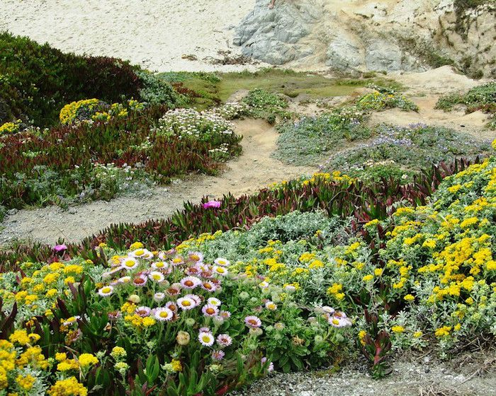 wildflowers growing along a coast with sand and rocks