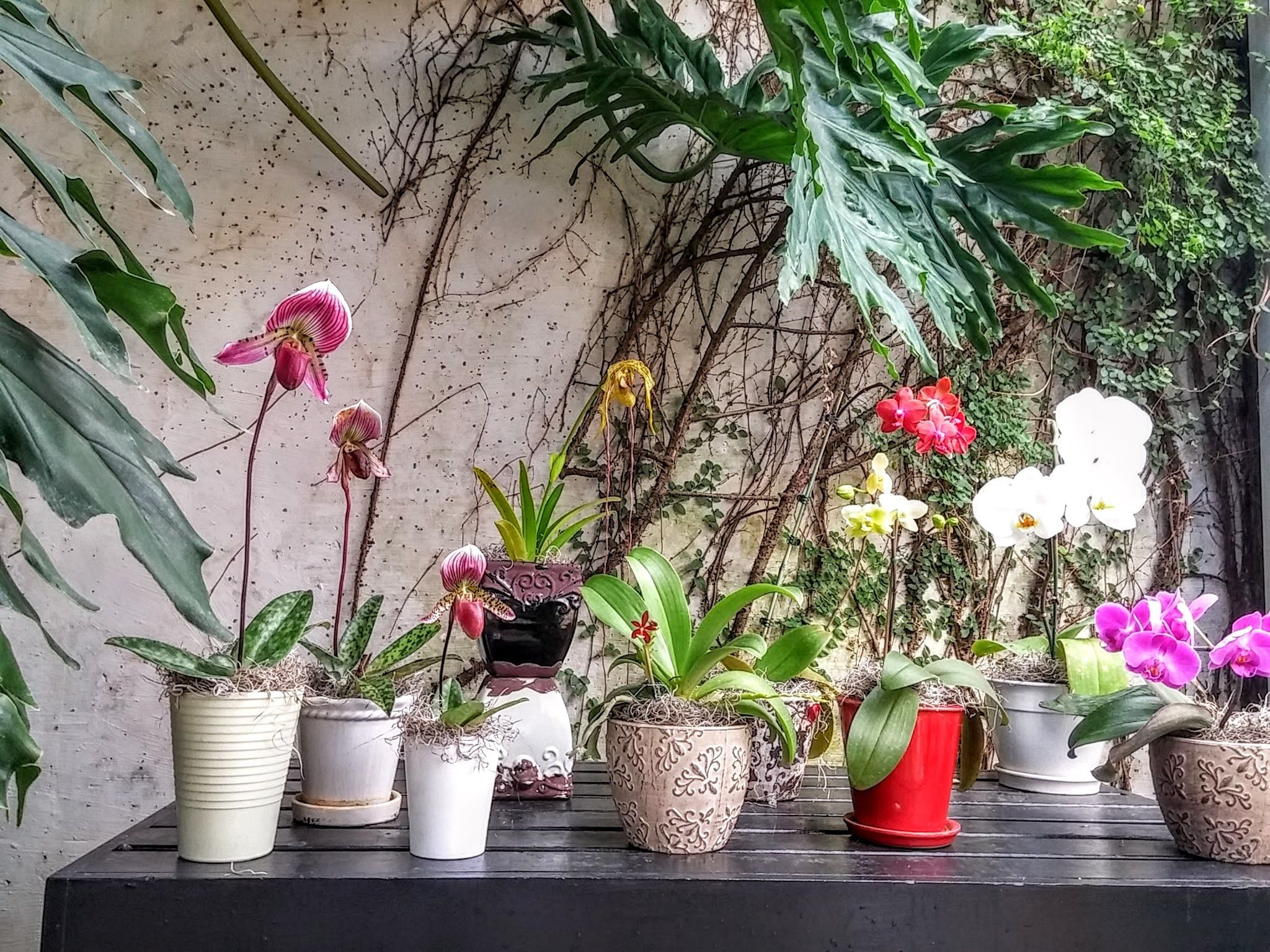 14 Tropical Flowers You Can Grow Almost Anywhere