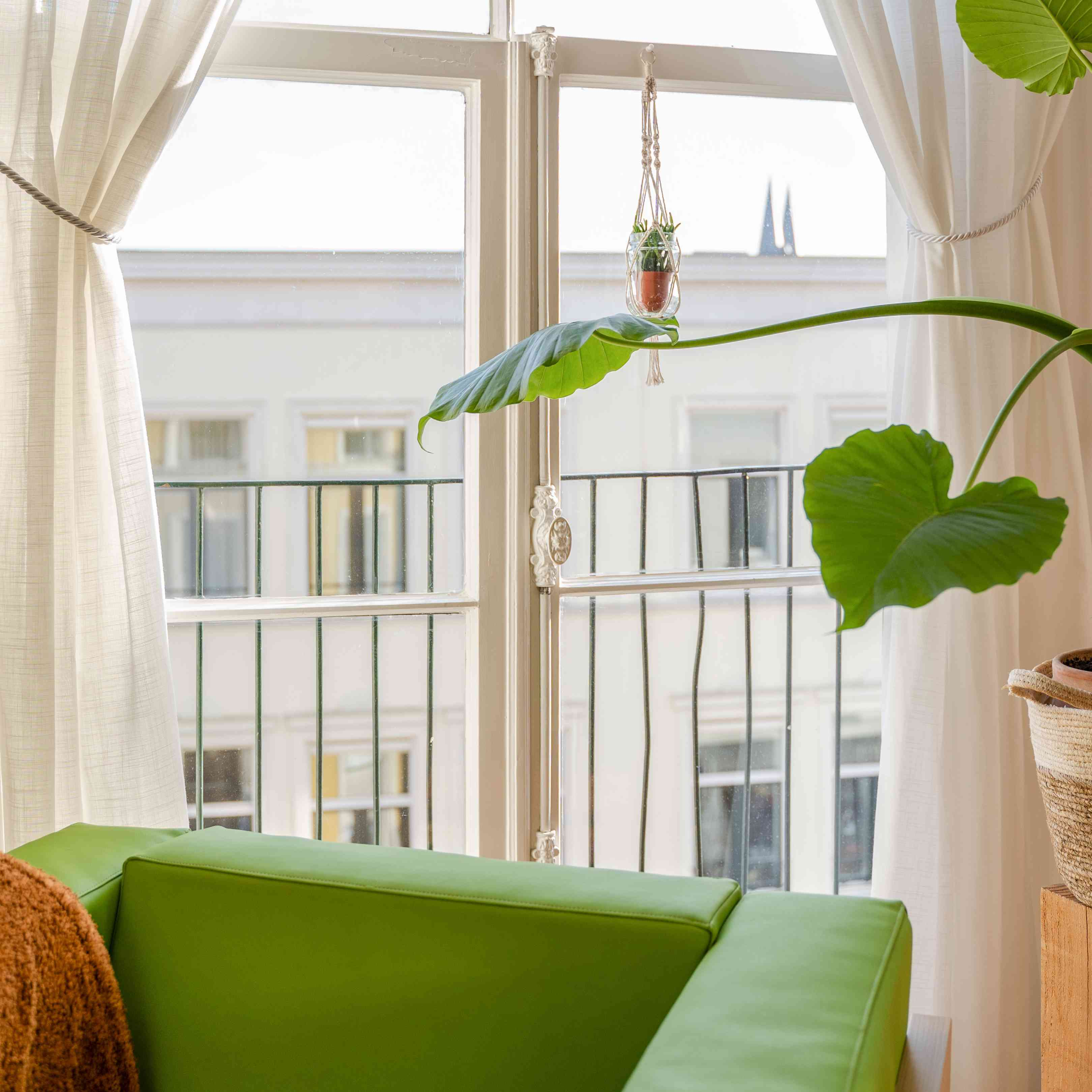 green armchair and green plant next to a window with white drapes