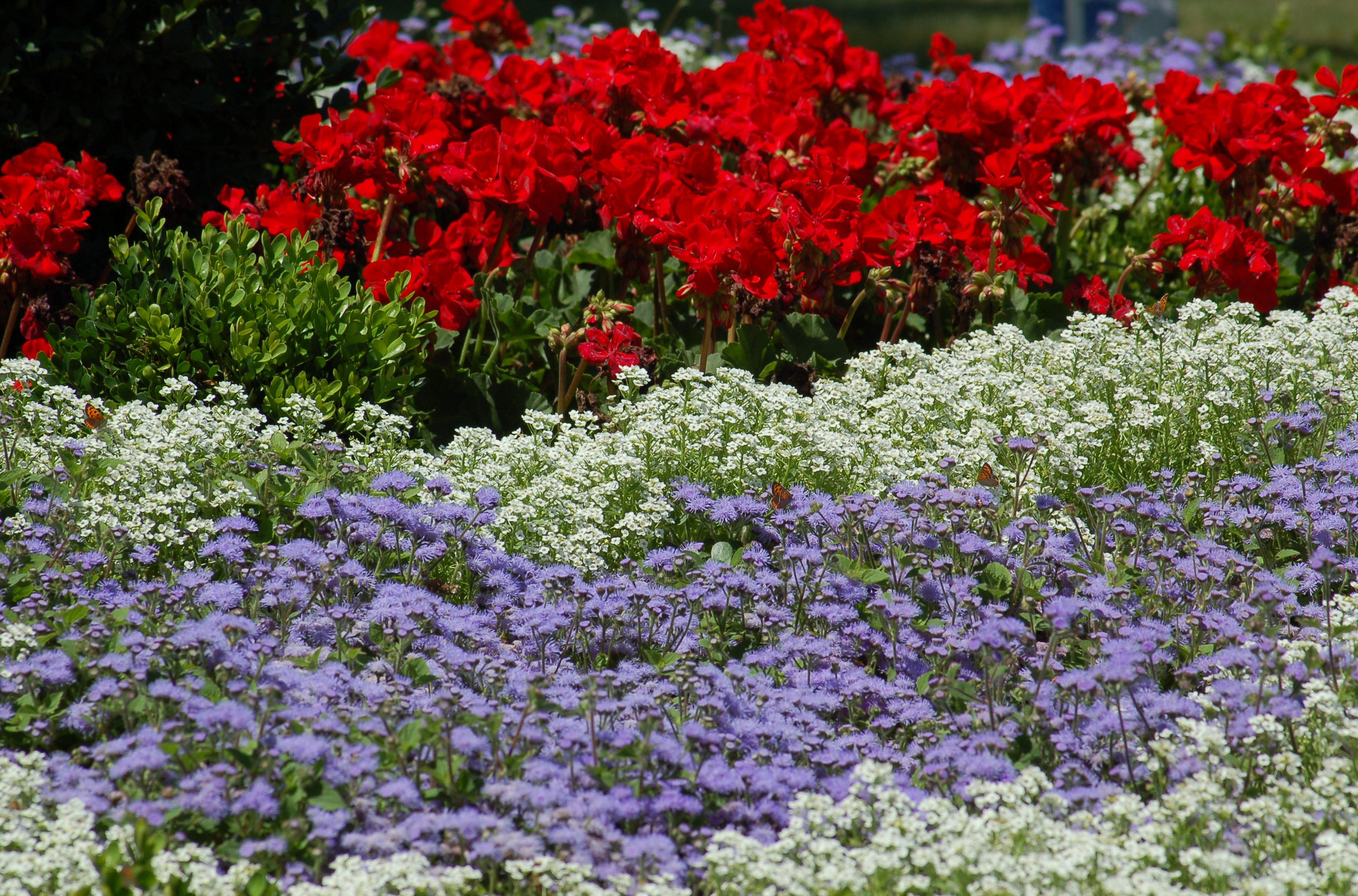 Landscape Color Schemes Ideas For Plant Combinations