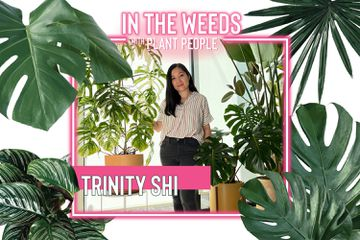 Trinity Shi for In the Weeds With Plant People