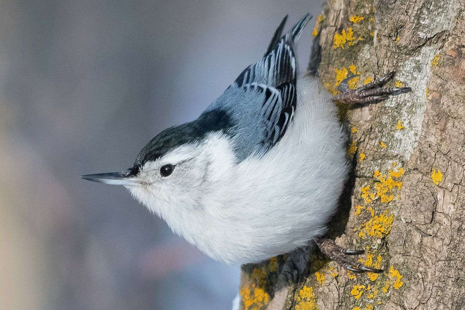 12 Beneficial Birds You Want in Your Yard