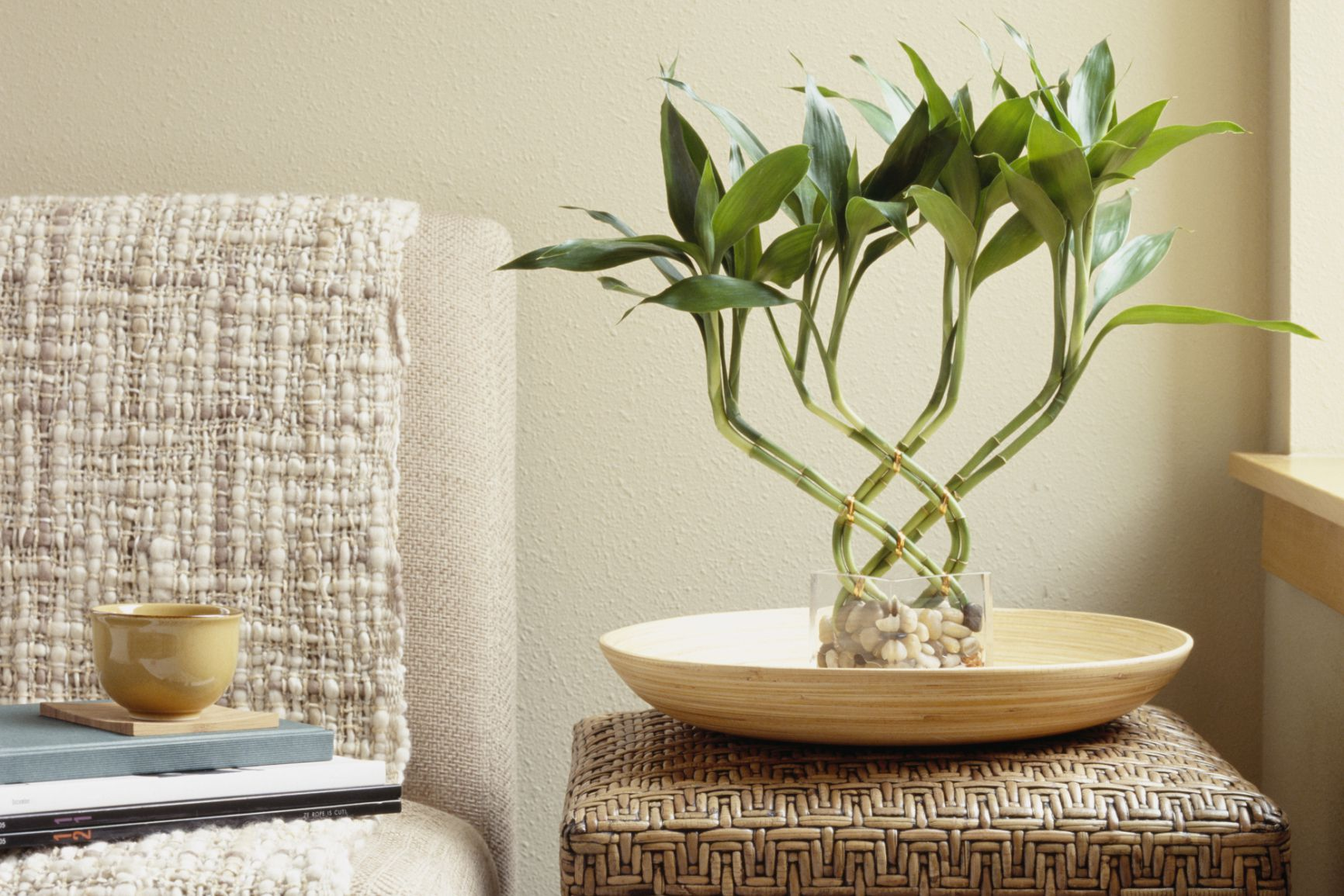 how to grow lucky bamboo faster