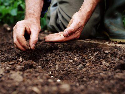 Gardener planting seeds, close-up
