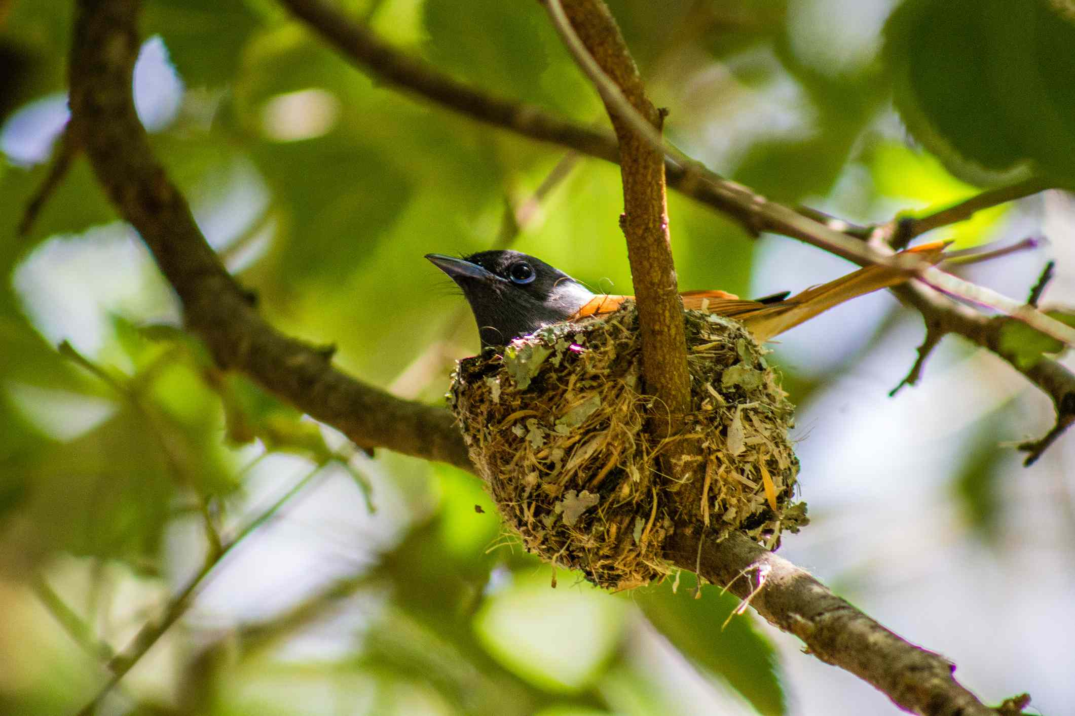 Hummingbird in a nest