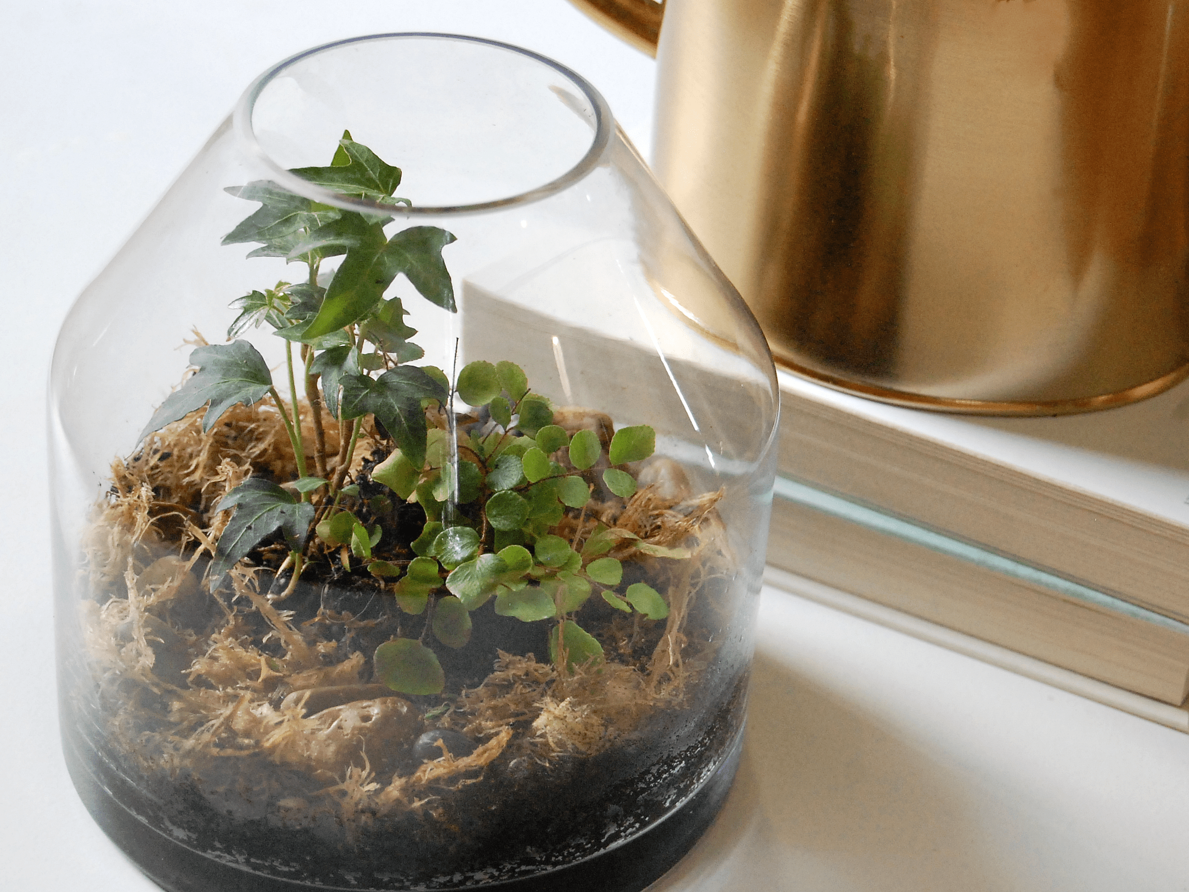 Common Terrarium Mistakes And How To Avoid Them