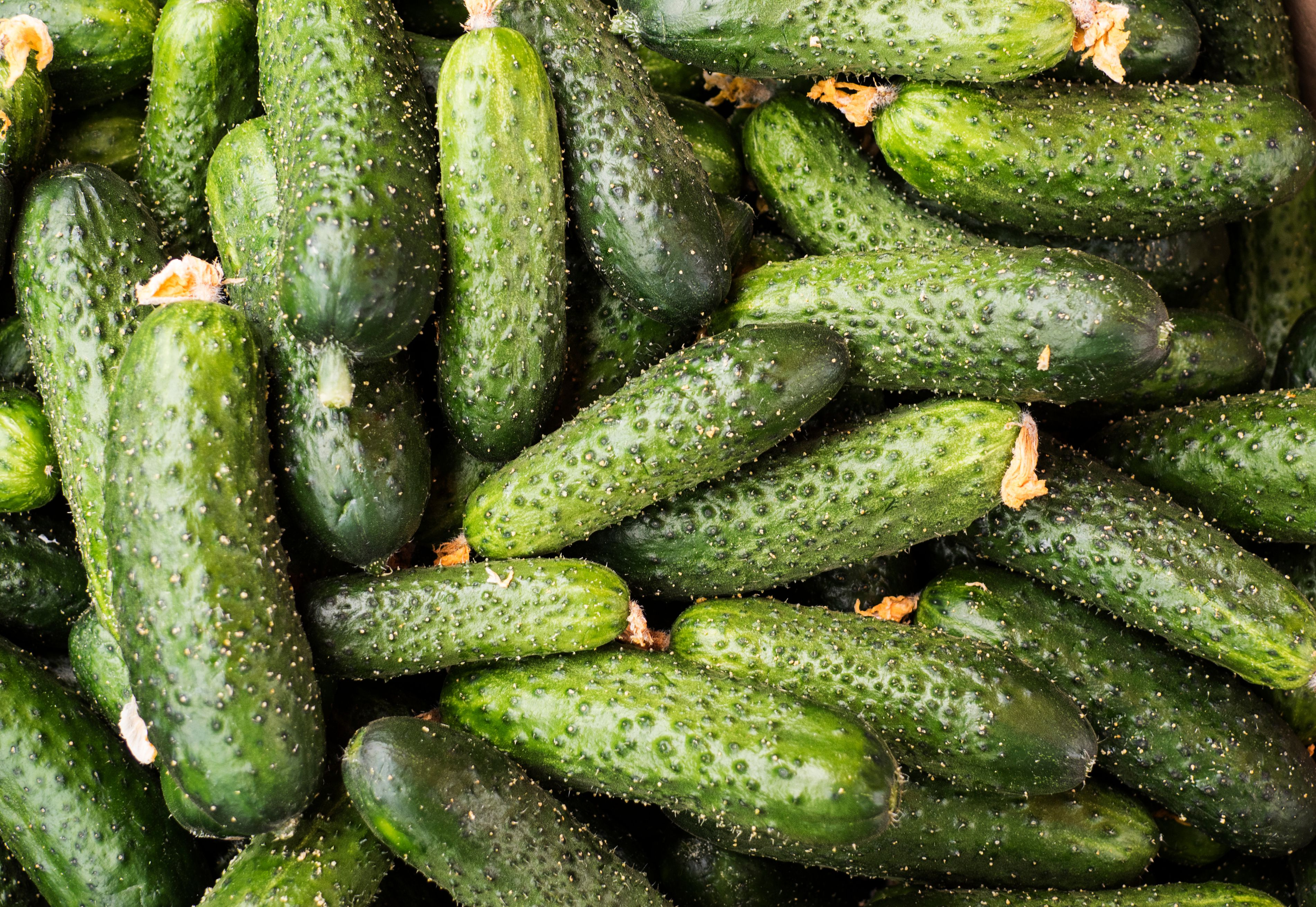 How and When to Harvest Cucumbers