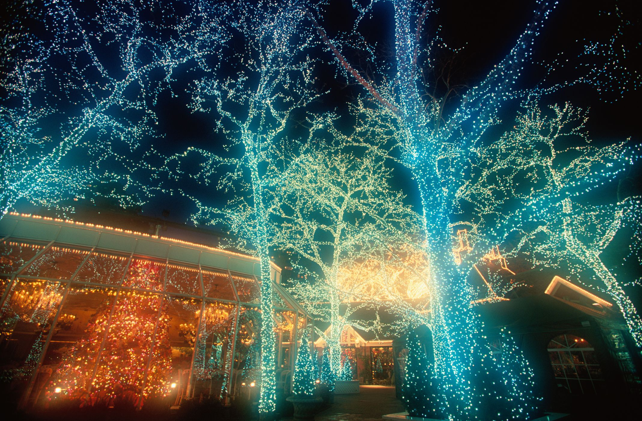 Trees lighted up with blue Christmas lights and a lit star in orange.