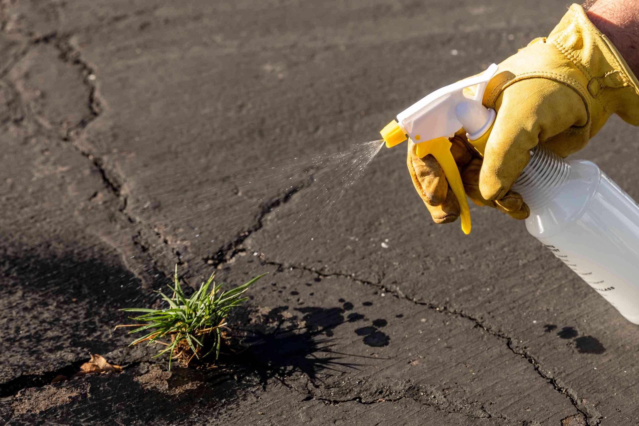 Weeds growing between cement crack sprayed by plastic bottle with mixture