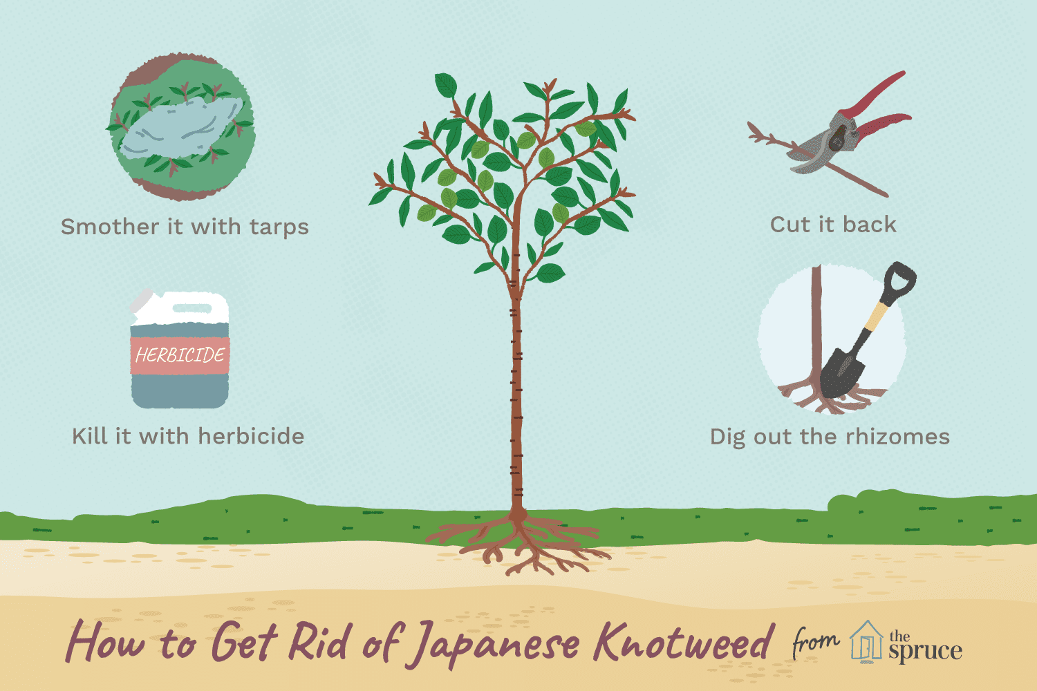 How to Eradicate Japanese Knotweed