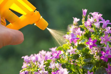 What Exactly Is Horticultural Oil?