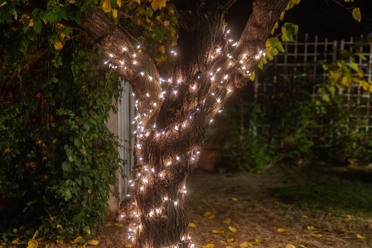 How To Wrap Trees With Outdoor Lights, Best Outdoor Solar String Lights For Trees