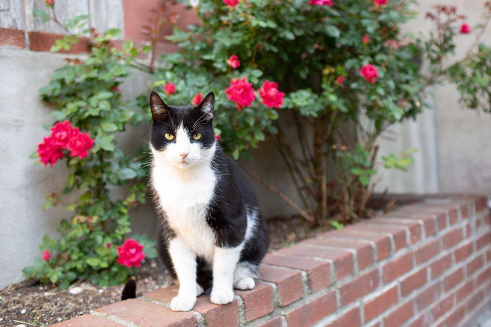gato callejero en un patio trasero