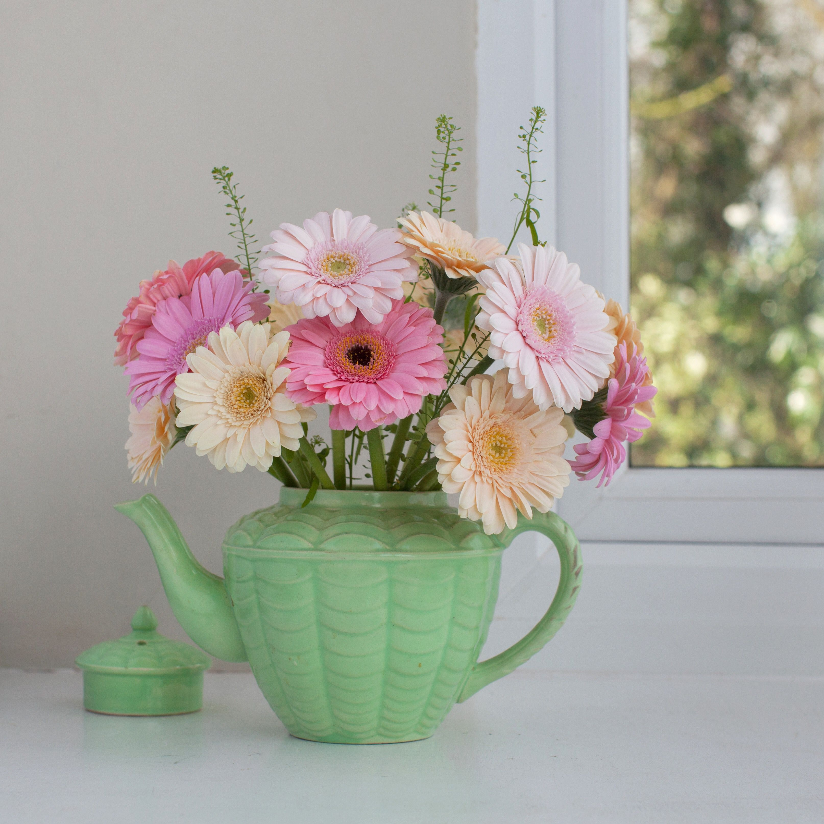 Growing gerber daisies yourself izmirmasajfo
